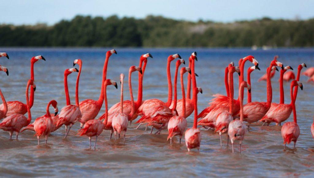 dónde ver flamingos México