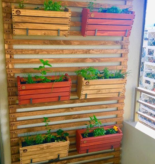 también puedes adaptar alguna pared y hacer tu propio jardín vertical para tener tu propio huerto