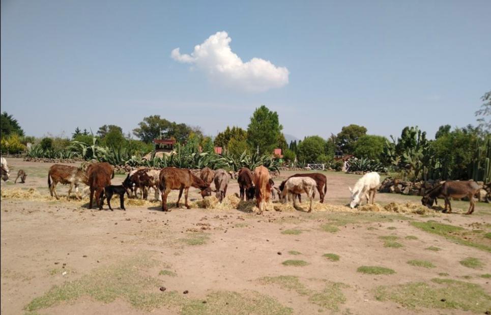 burro burrito adopta apadrina