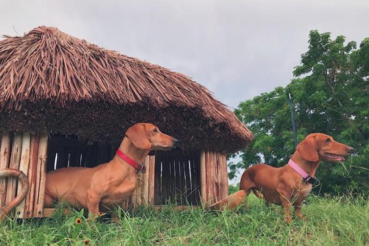 Archipeture casas mayas para perro