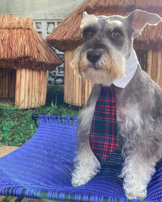 chozas mayas para perro casas ecofriendly