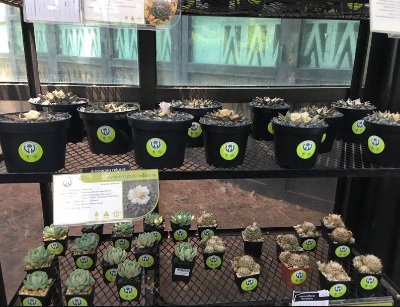 Adopta una planta en el Jardín Botánico de la UNAM