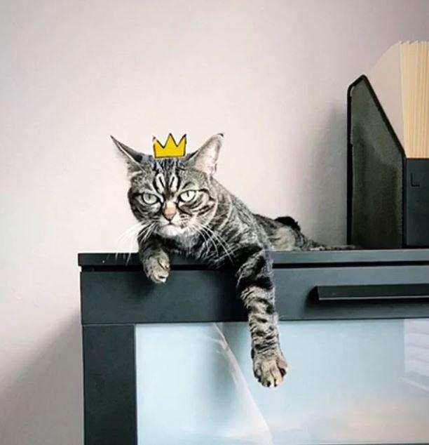 Kitzia es la nueva gatita que esta triunfando en internet