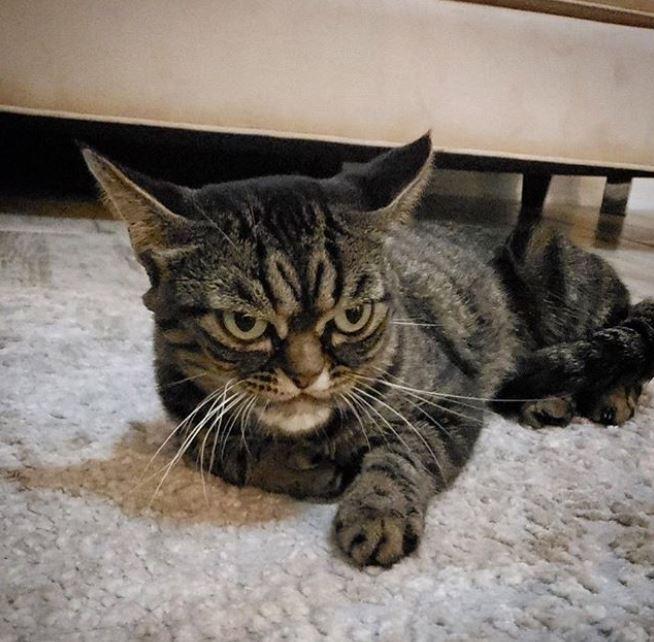 La nueva Grumpy Cat vive en Florida junto a su humana