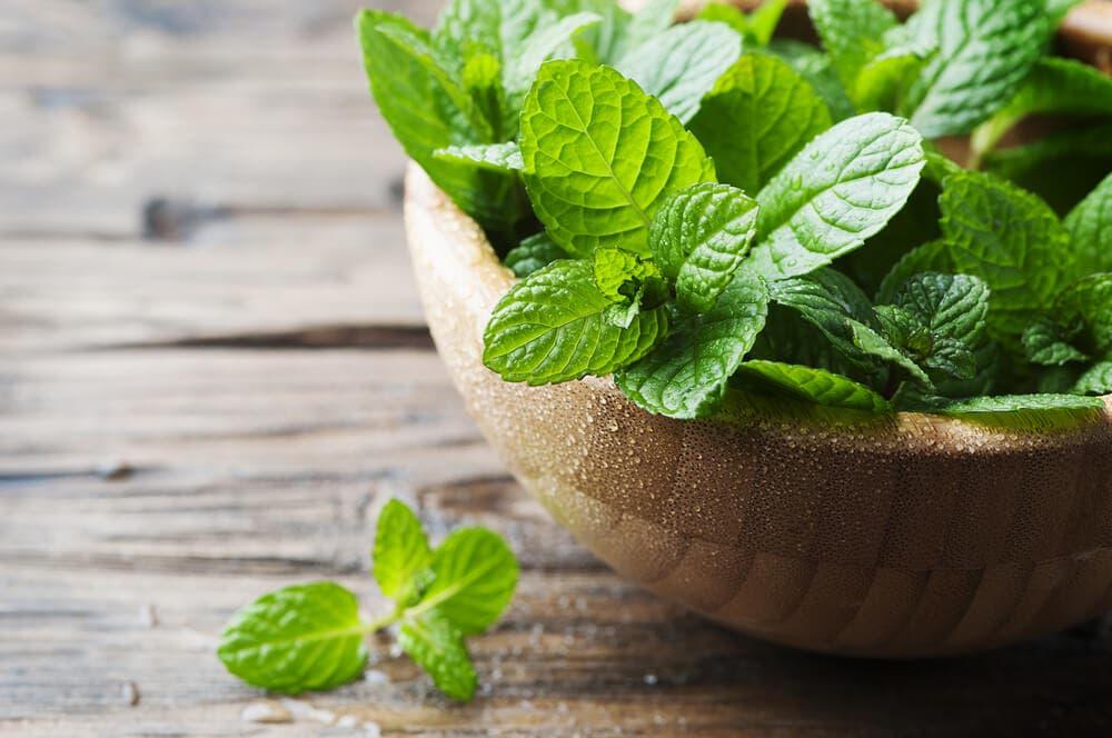 Plantas que no pueden faltar en tu cocina