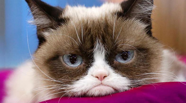 Tabatha grumpy cat