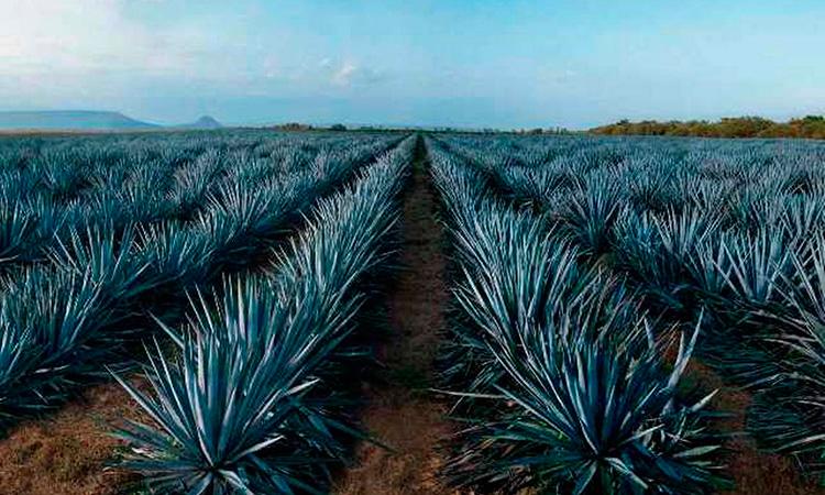 Tequila origen