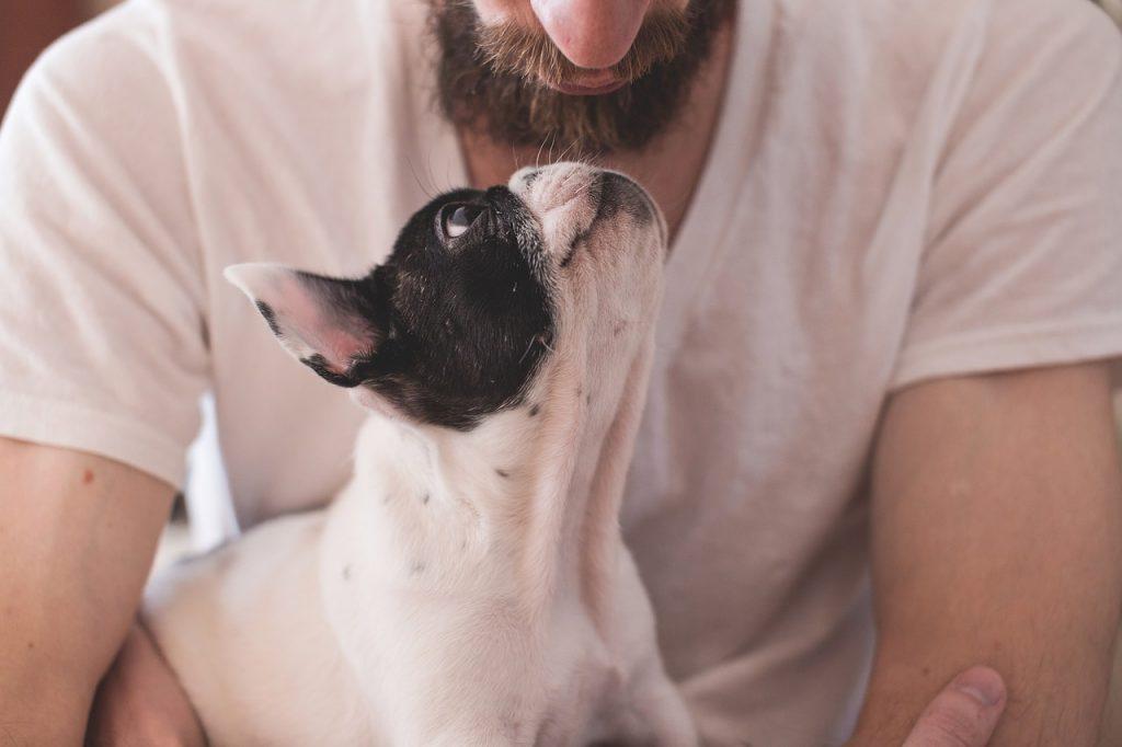 adopción adopta perro pug