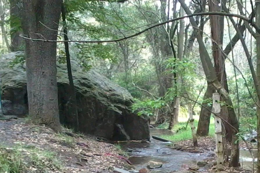 piedra bosque tlalpan