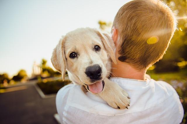 adopción perros CDMX