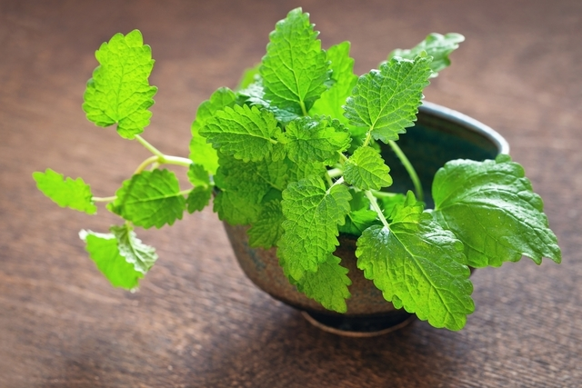 Plantas medicinales que son mexicanas