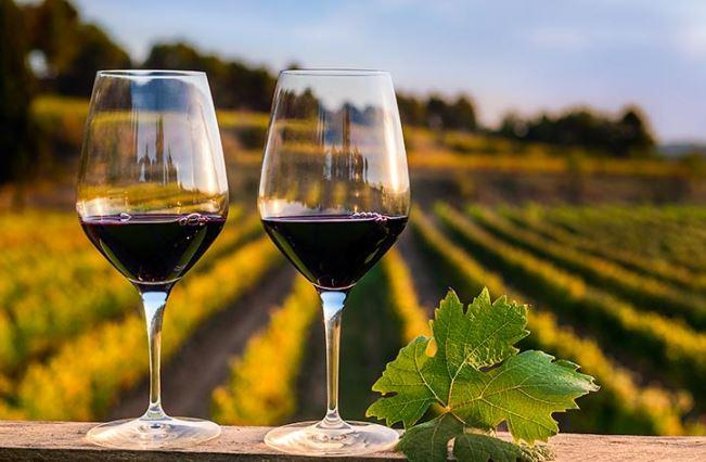 Valle de Guadalupe está nominado a la mejor región vinícola