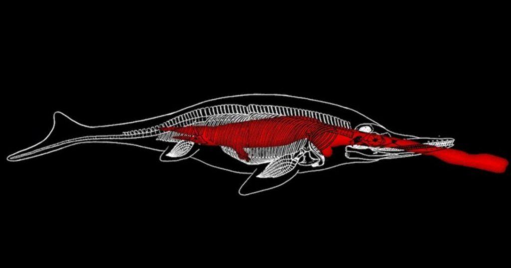 Los científicos en China se percataron que el depredador marino tenía en su estómago a su última presa, un talattosaurio de 4 metros de largo