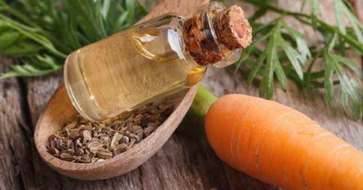 Usos Y Beneficios Del Aceite De Zanahoria Ciudad Trendy Las zanahorias se pueden comer crudas o cocidas y pueden ser almacenadas para el invierno. usos y beneficios del aceite de