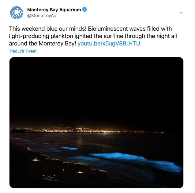 California bioluminiscencia
