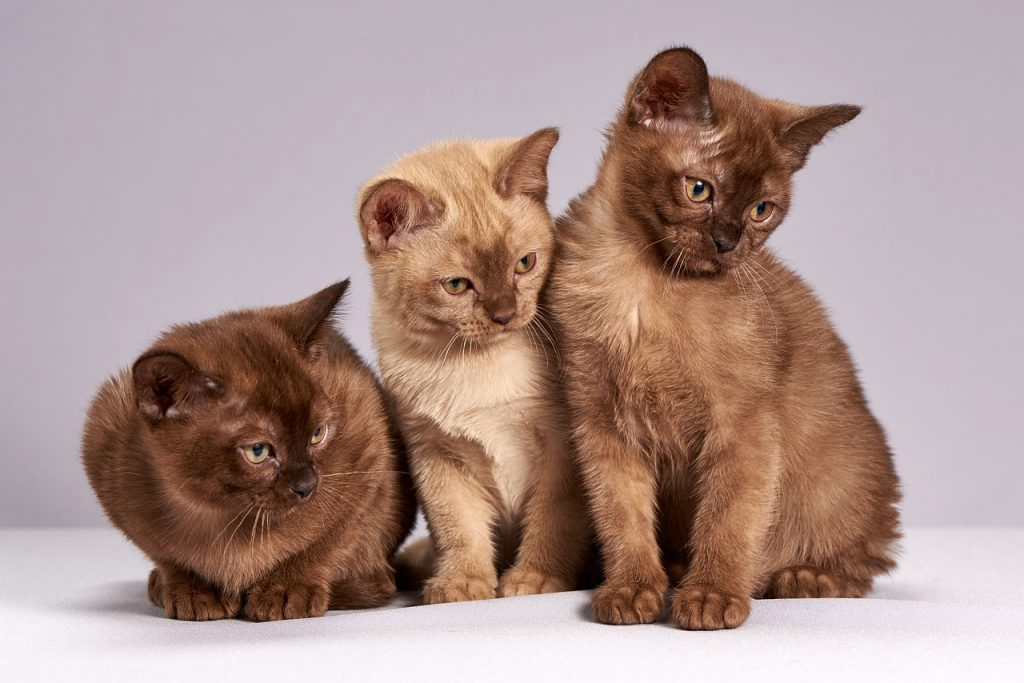 mitos gatos
