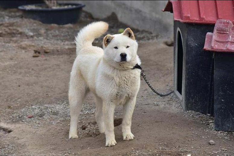 Kim Jong-un prohibe perros