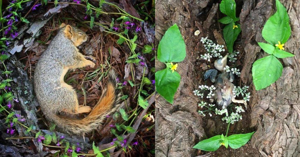 Amanda-Stronza-altares-animales-muertos-7