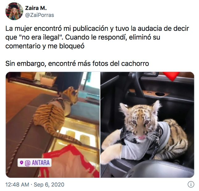 mujer pasea tigre centro comercial