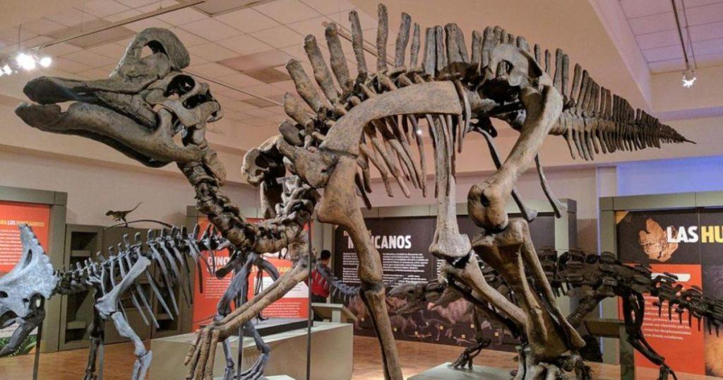 Dinosaurios-MX-2