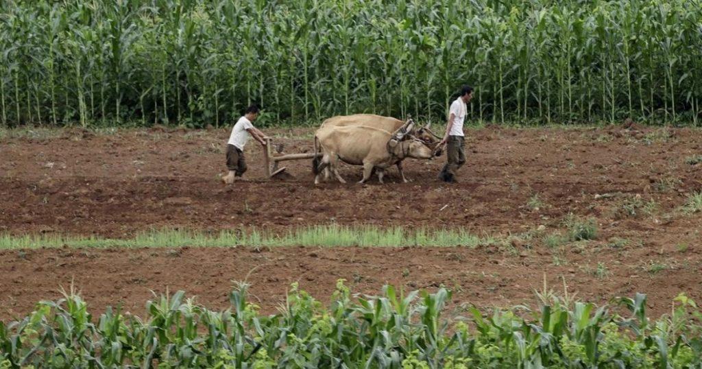 La-crisis-alimenticia-que-empieza-en-Corea-del-Norte-2