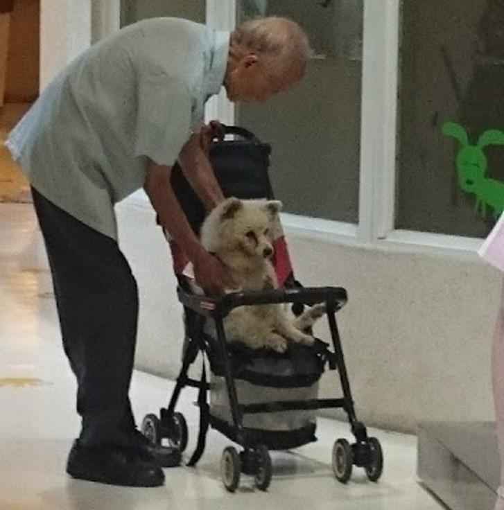 abuelito lleva perro veterinario carriola