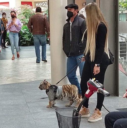 tigre antara