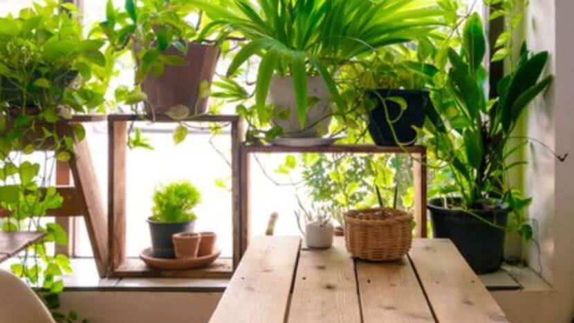 Cómo proteger tus plantas del frío