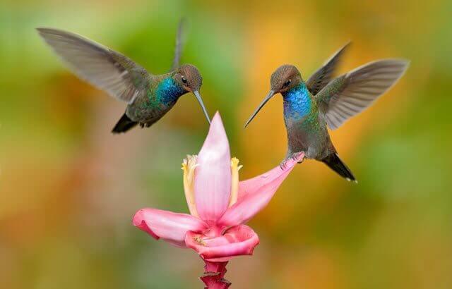 ¿Es conveniente tener bebederos caseros para los colibríes?