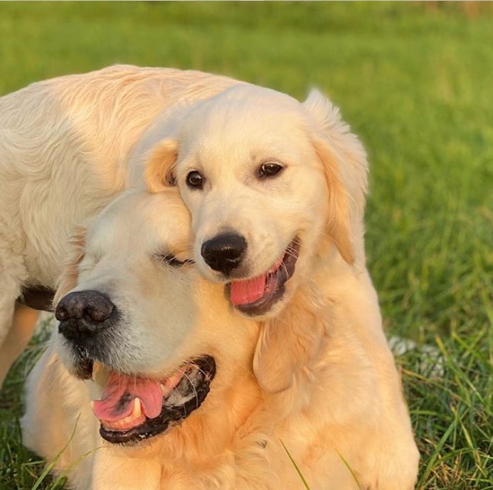 perrito ciego cachorro guía