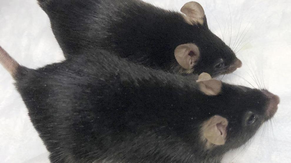 Súper ratones investigación espacio