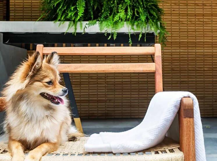 5 hoteles petfriendly para viajar con tu perrito
