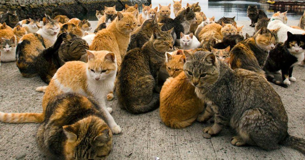 Aoshima-Isla-de-los-Gatos-Japón-4