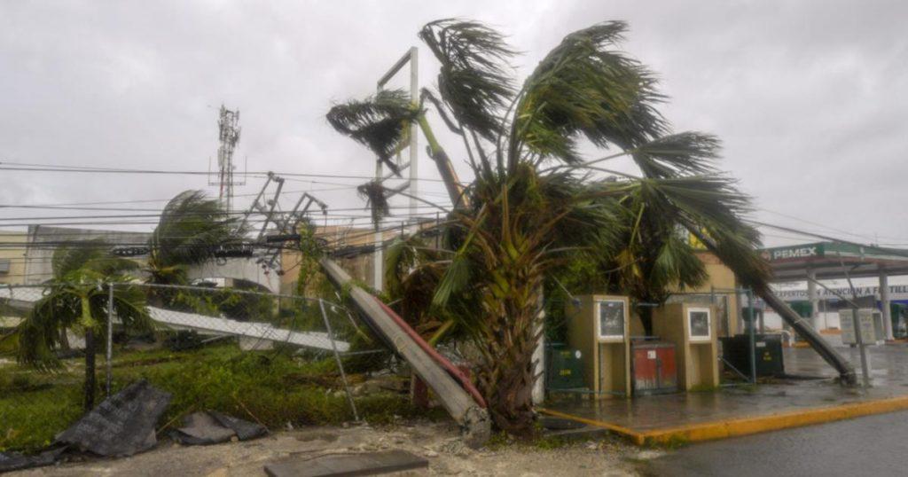 Árboles-caídos-Cancún-reto-Planta-un-árbol-2