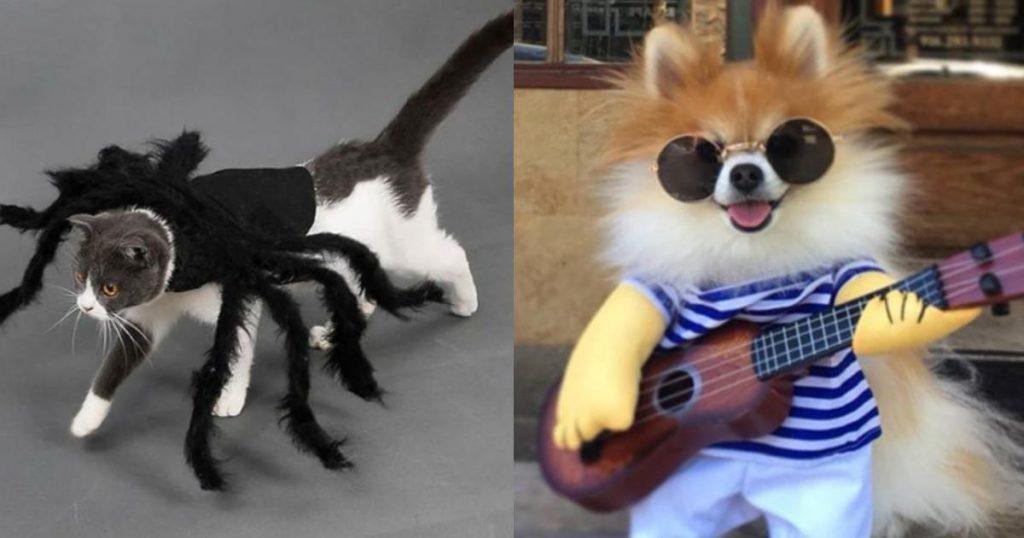 Disfraces-mascotas-Halloween-Día-de-Muertos-7