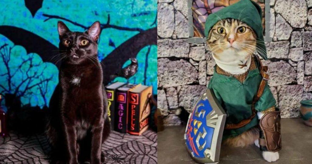 Disfraces-mascotas-Halloween-Día-de-Muertos-8