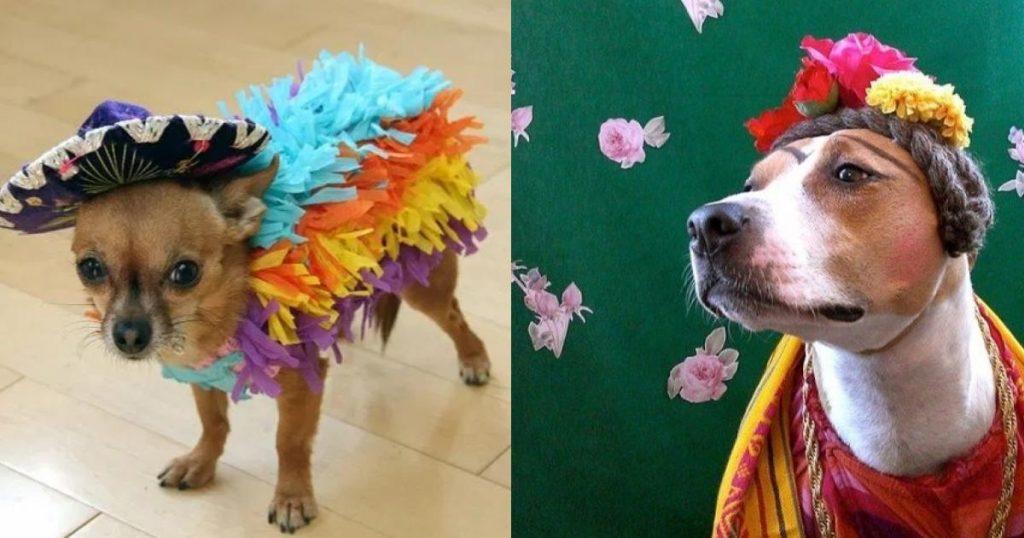 Disfraces-mascotas-Halloween-Día-de-Muertos-9