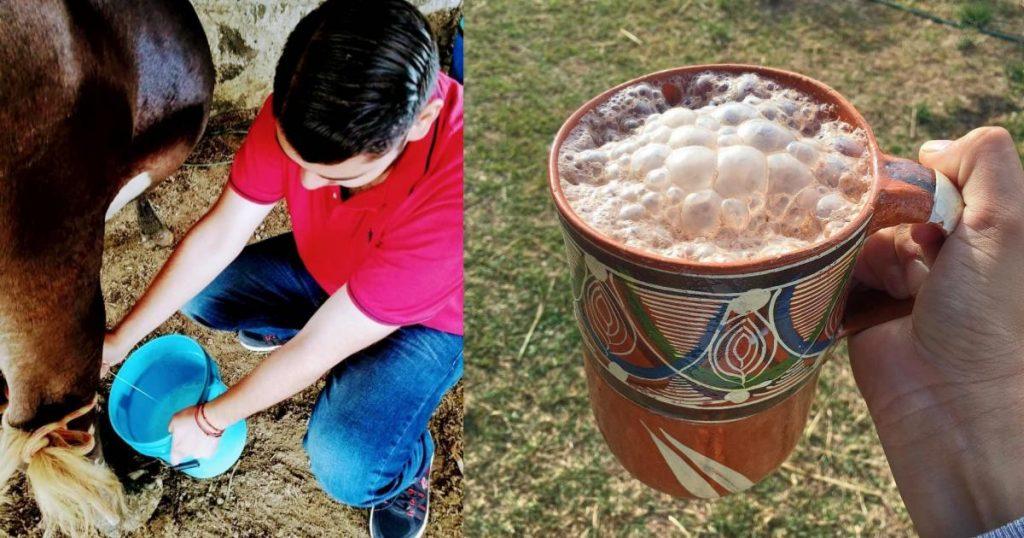 Pajarete-bebida-con-leche-bronca-y-mata-cruda-2