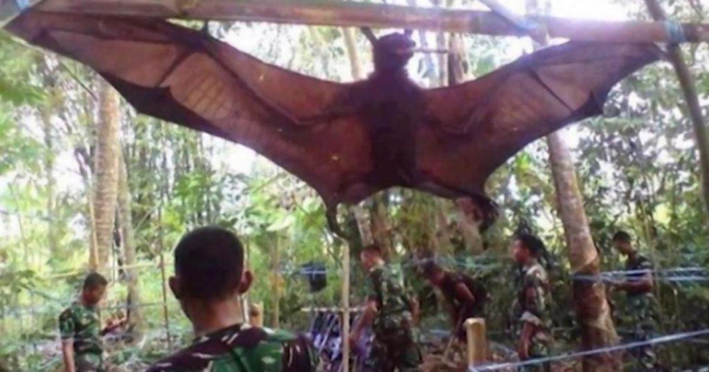 Zorro-volador-Filipinas-murciélago-gigante-3