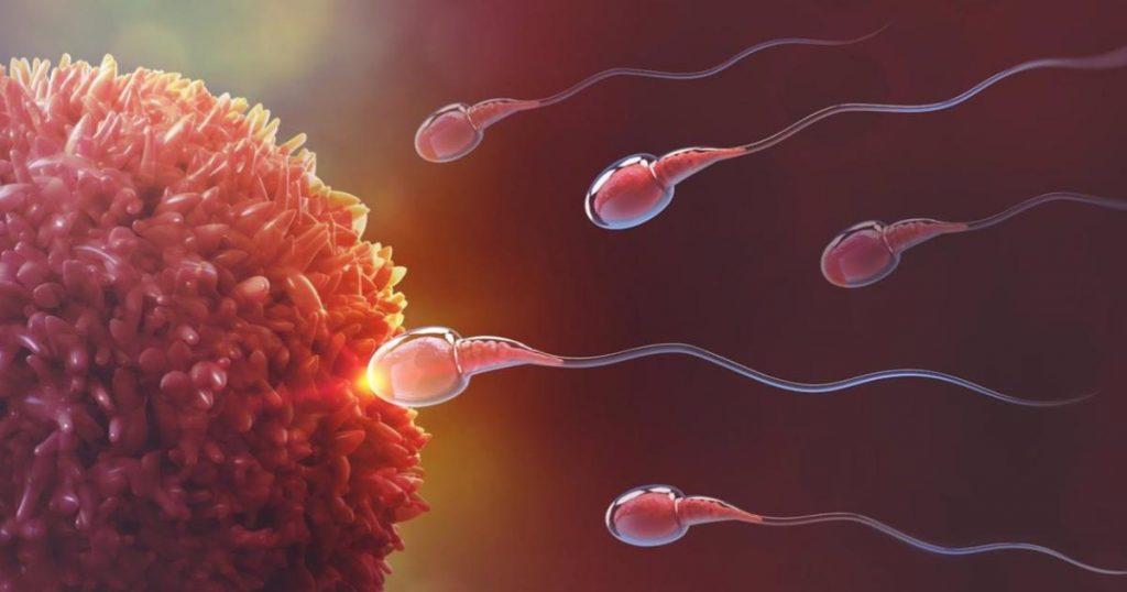 Covid-19-causa-infertilidad-daño-testículos-hombres-3
