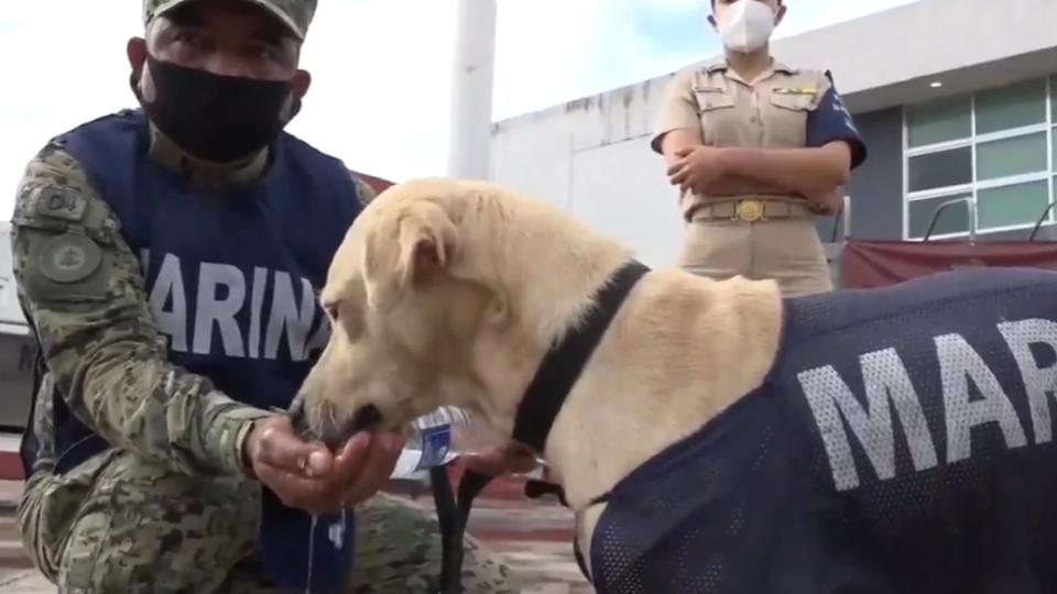 Donatelo-y-Neron-nuevos-nombres-perritos-rescatados-SEMAR-3