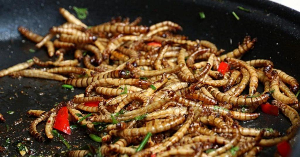Insectos-ricos-gastronomía-mexicana-Gusanos-blancos