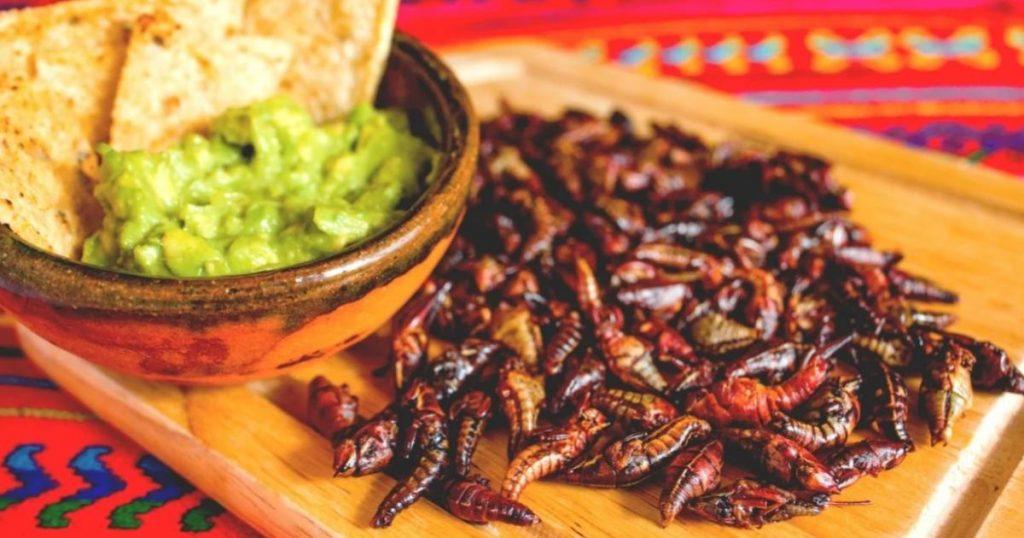 Insectos-ricos-gastronomía-mexicana-Chapulines