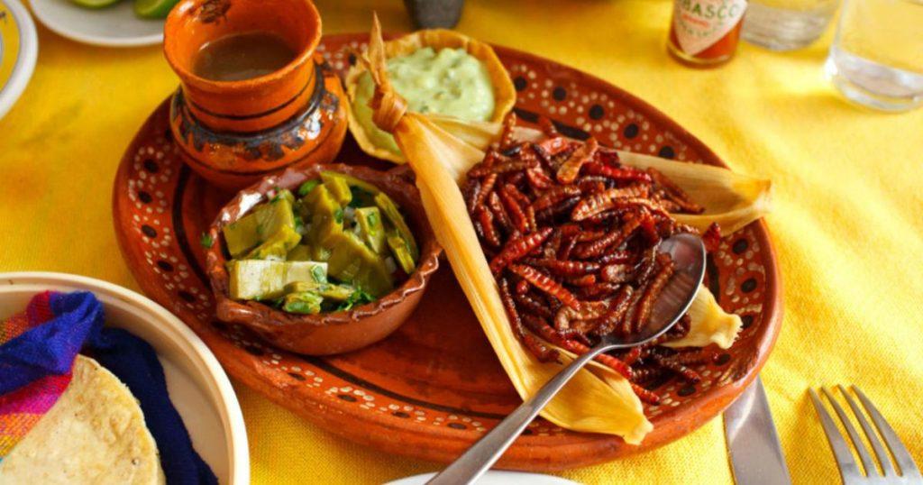 Insectos-ricos-gastronomía-mexicana-Chinicuiles