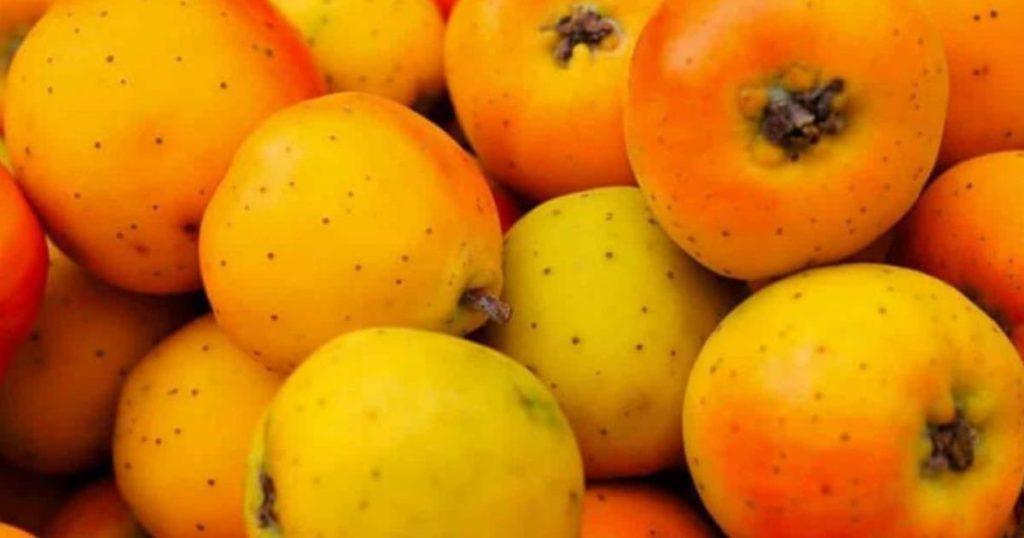 Tejocote-fruta-mexicana-2