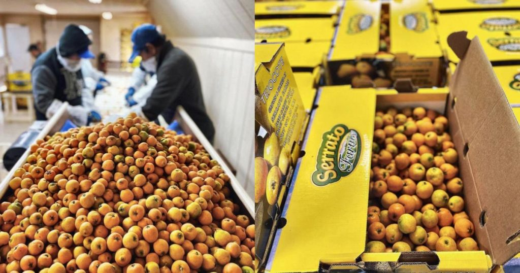 Tejocote-fruta-mexicana-producción