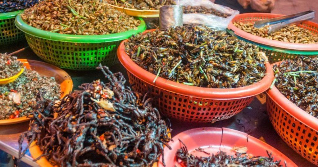 Variedad-de-insectos-mexicanos