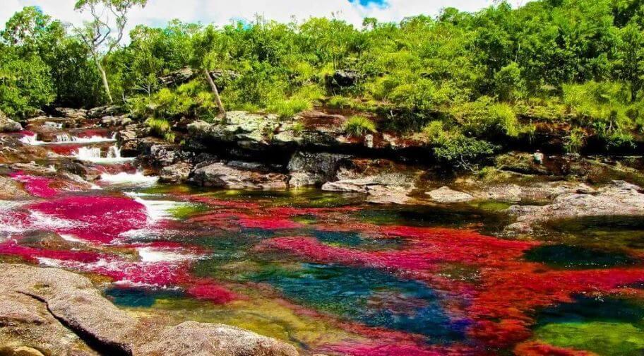 Ya conoces Caño Cristales en Colombia