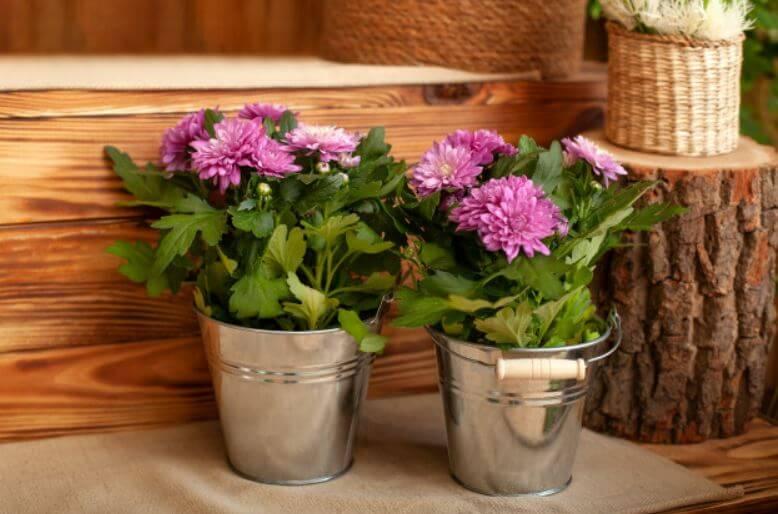 Plantas que eliminarán los malos olores de tu hogar