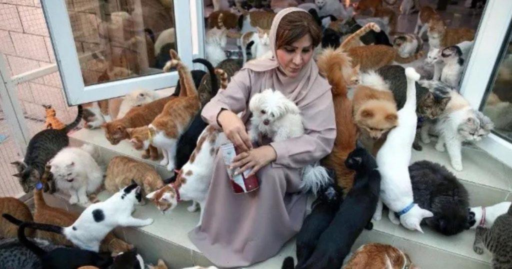 Maryam-al-Balushi-tiene-500-gatos-4